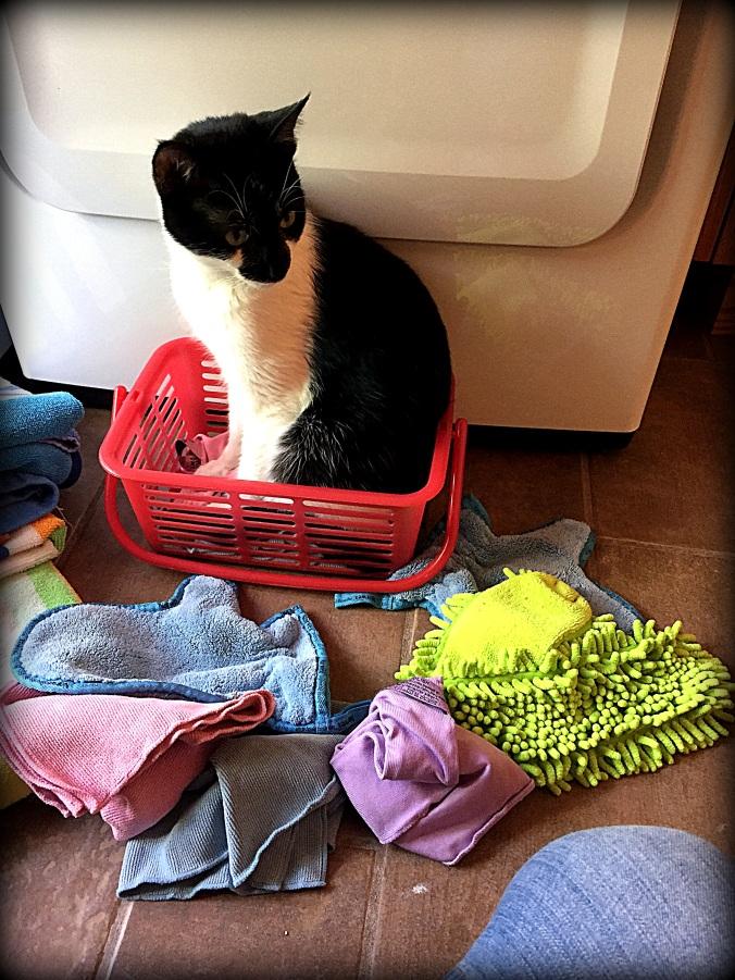 mortimer_cat